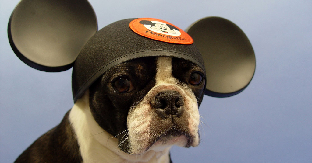 are the disneyland hotels pet friendly